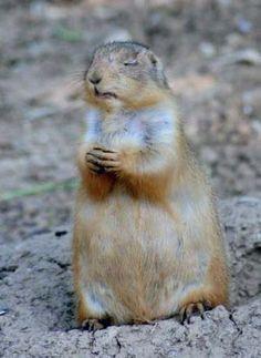 たぶん祈る動物の写真 - 宗教 - ナイジェリア