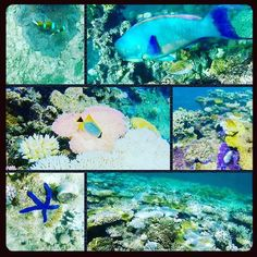 #incredible #greatbarrierreef #beautiful #fish #coral #cairns #snorkeling #gopro #goprooftheday #australia #travelling by lucyhowes94 http://ift.tt/1UokkV2