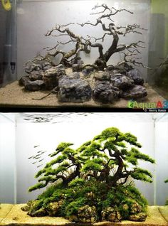 21 Best Aquascaping Design Ideas to Decor Your Aquarium - Tips Inside - Jempolkaki Inc. - - 21 Best Aquascaping Design Ideas to Decor Your Aquarium – Tips Inside DIY fish tank decorations Themes Aquascaping, Fresh Water Decor Ideas, Small Aquascapi Planted Aquarium, Aquarium Aquascape, Diy Aquarium, Aquarium Design, Aquarium Terrarium, Aquarium Landscape, Nature Aquarium, Aquarium Fish Tank, Goldfish Aquarium