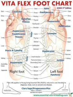These are points on your feet that correspond with your body. Put Young Living oils on the points and massage. Ask me about how you can get started with Young Living EO's. Yl Oils, Aromatherapy Oils, Doterra Essential Oils, Essential Oil Blends, Aromatherapy Recipes, Young Living Oils, Young Living Essential Oils, Technique Massage, Massage Techniques