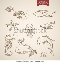Underwater world sea life ocean set. Engraving style pen pencil crosshatch hatching paper painting retro vintage vector lineart illustration. Funny fish dolphin whale scat jellyfish shellfish star. - stock vector