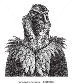Vulture head / vintage illustration from Meyers Konversations-Lexikon 1897 - stock vector