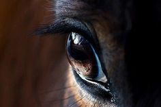 A large and liquid eye, the swirl of dust around pounding hooves, these, then, are the images that move us.