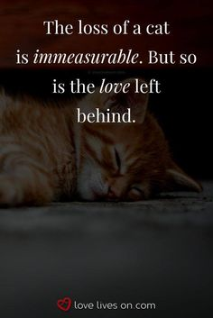 Losing a pet quotes cat so true ideas Pet Quotes Cat, Pet Loss Quotes, Animal Quotes, Love For Animals Quotes, Crazy Cat Lady, Crazy Cats, I Love Cats, Cute Cats, Pet Loss Grief