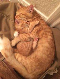 Click the Photo For More Adorable and Cute Cat Videos and Photos - Adorable Cats and Cute Kittens - Katzen Bilder Cute Little Animals, Cute Funny Animals, Funny Cats, Cute Cats And Kittens, I Love Cats, Crazy Cats, Adorable Kittens, Orange Tabby Cats, Images Of Cute Kittens