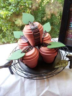 Succulent starter kit idea