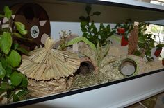 [Rodents hut] small green oasis for Rio - enclosure Presentation - www.the-hamsterforum.de