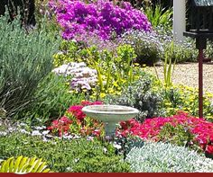 One of the great qualities of Fynbos is the large variety of colours that can be found. Bofberg Flowers will assist in making sure that you the best flowers in each season for your cut flower arrangements and bouquets. Outdoor Decor, Stepping Stones, Amazing Flowers, Fynbos, Arrangement, Flowers