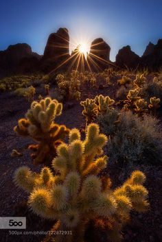 Yuma Arizona Local Info Sundance Rv Resort Yuma