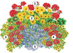 Pestrá výsadba - 1.2 x Pelargonium 2.2 Osteospermum 3.2 x Sanvitalia procumbens 4.2 x Verbena 5.1 x Scaevola