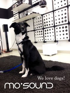 We love dogs!  #Design #Lautsprecher #Hifi #Keramiklautsprecher #KugelLautsprecher #Kugellautsprecher #Lautsprecherboxen #Porzellan #Regallautsprecher #weiß #Dogs #hunzilove #supportyourlocalbusiness #localstore #Vienna Love Dogs, Kugel, Store, Animals, Record Player Table, Nice Asses, Animales, Animaux, Larger