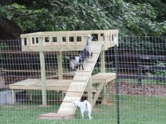 Goat Chicken Playground And Shelter Goats Amp Llama