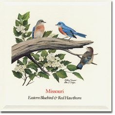 Bluebird Cafe Kansas City Missouri