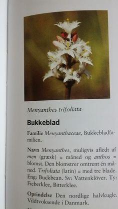 Bukkeblad vandplante