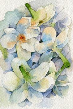 jasmine watercolor by Sirikul (Kay) Pattachote, via Flickr