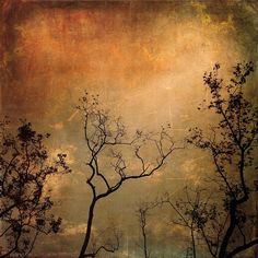Fine Art Photography, Art Print, 8.5 x 11, Sycamore trees, nature... ($20) ❤ liked on Polyvore featuring home, home decor, wall art, orange home decor, orange wall art, orange tree, photography wall art and fall home decor
