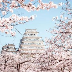 Here's Everything You Need to Know About Visiting Japan in the Spring | MyDomaine