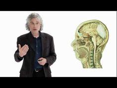 ▶ Steven Pinker: Linguistics as a Window to Understanding the Brain - YouTube