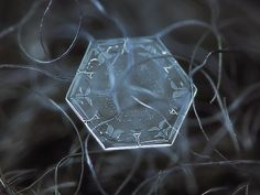 Nature Knows: Amazing macro-photography of individual snowflakes Pictures]. Who could possibly have put so much thought and design into snowflakes? Fotografia Macro, Close Up Photos, Cool Photos, Amazing Pictures, Snowflake Photography, Snowflake Pictures, Photo Macro, Micro Photography, Photography Ideas