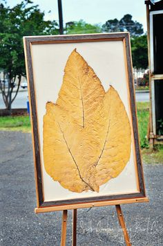 Framed Tobacco Leaves from South Carolina Joggling Board Company