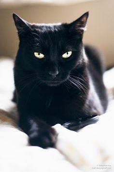 sou um negro gato!