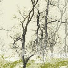 Valokuvatapetti - Wander Land Moss