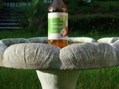 To keep algae growth down and your bird bath clean, add 1 capful of apple cider vinegar or 1 teaspoon per gallon of water to the bird bath. The apple cider vinegar also provides vitamins & minerals to the birds.