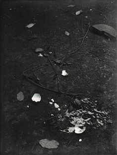Josef Sudek, Untitled (Still life with Branches and Broken Egg), 1950-54