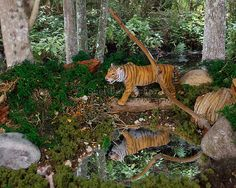 Tiger Diorama, originally uploaded by hbwphbwp. Except for a couple of things, but I'm not saying what. Okay I don't like that some of the green is too dark. I think th… Leopard Habitat, Tiger Habitat, Forest Animals, Zoo Animals, Animals For Kids, Project Tiger, Rainforest Project, Preschool Jungle, Forest Ecosystem