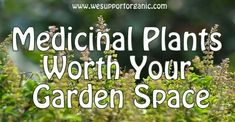 Natural Health News and Wellness Tips: 10 Medicinal Plants that Should be in Every Garden