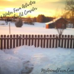 Winter Farm Activities to Try on Your Farm or Homestead -- With winter comes cold and shorter days.  Even though you might not be doing as many outside projects in the winter, there are still so many activities to get done on the farm or homestead.  Here are 4 winter farm activities you should try.