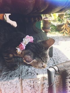 Cloudy Chase: Pet Flower Collar DIY - would never do this to my cat, but this picture is so cute!!!