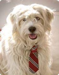 "Thwap ""Classic Tie Collar"" in silk, $28; thwapthwap.com"
