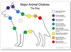 Dog Chakras - yes they have them and you can help them heal you, as they are absorbing your energy and healing you.