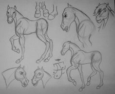 Horse Anatomy Study by -- used refs of photos and my childhood favorite movie Art Rules, Horse Anatomy, No Drama, Anatomy Study, We Are Family, Drawing Tips, My Childhood, Art Boards, Pony