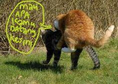 Kucing berantem wuuush wuuuush