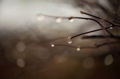 raindrop by Jessica Tekert on 500px
