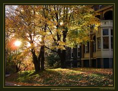 Autumn trees photographed against the sun with the backlight illuminating leaves of the trees in Charlottetown, Prince Edward Island, Canada...