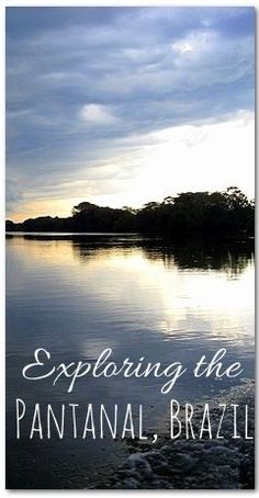 Exploring the Pantanal Wetlands in Brazil - have you ever wanted to go?