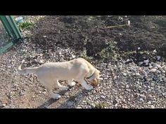 Sultan Yavru Kangal vs Kumrular - YouTube