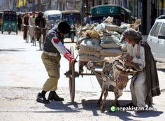 A traffic policeman helps a labor to remove his stuck donkey-cart at a broken road