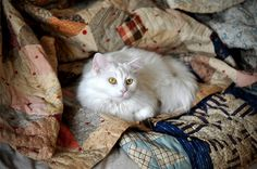 Kitty nestled in quilts. by Demure Folk.