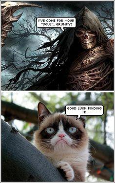 Grumpy Cat www.catsandkittensbreeds.com