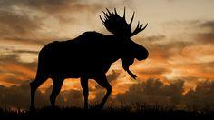 Welcome to Bull Moose Industries | Bull Moose Industries