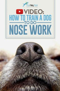 Dog Training - CLICK PIC for Various Dog Care and Training Ideas. #doglovers #dogtraining