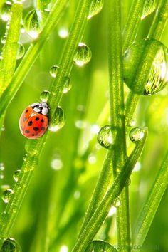 Экология: береги природу! | Животные и растения | ВКонтакте