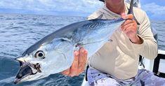 How To Make & Rig Bonita Strips To Catch Big Sharks Little Fish, Big Fish, Circle Hook, Big Shark, Fishing Times, Shark Bait, Live Bait, Best Fishing, Saltwater Fishing