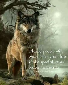 Sometimes a Wolf does. It is a memory you never forget. Wolf Qoutes, Lone Wolf Quotes, Wolf Photos, Wolf Pictures, Wolf Spirit, My Spirit Animal, Wisdom Quotes, True Quotes, Native American Quotes