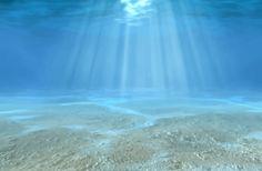 Clear Blue Underwater Wall Mural   MuralsWallpaper.co.uk