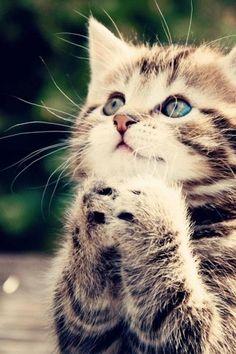 Cat, Cute, Animal